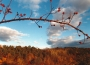 Barvy krajiny - kreativita - soutěžní fotografie